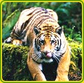 Wildlife Tours in North India